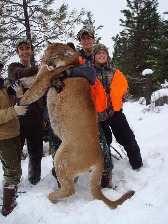big mountain lion