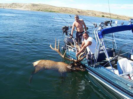 Elk Fishing Anyone?