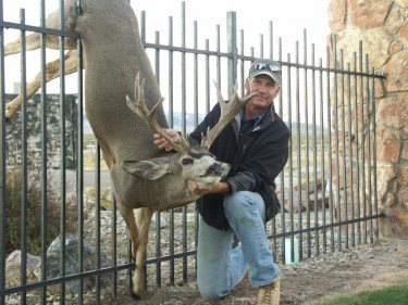 Mule Deer Caught on Fence